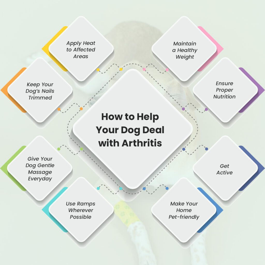How to Help Your Dog Deal with Arthritis