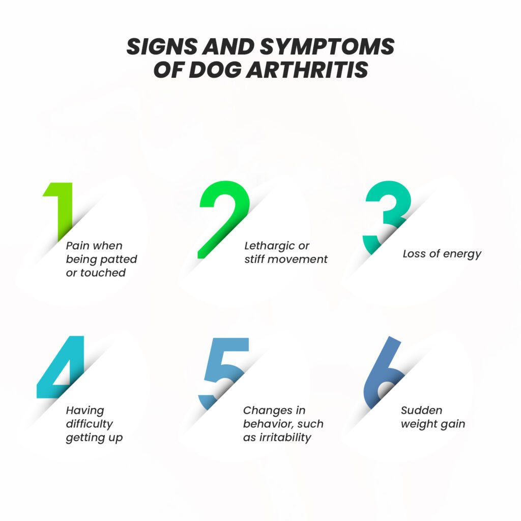 What are the Signs and Symptoms that Your Dog Has Arthritis