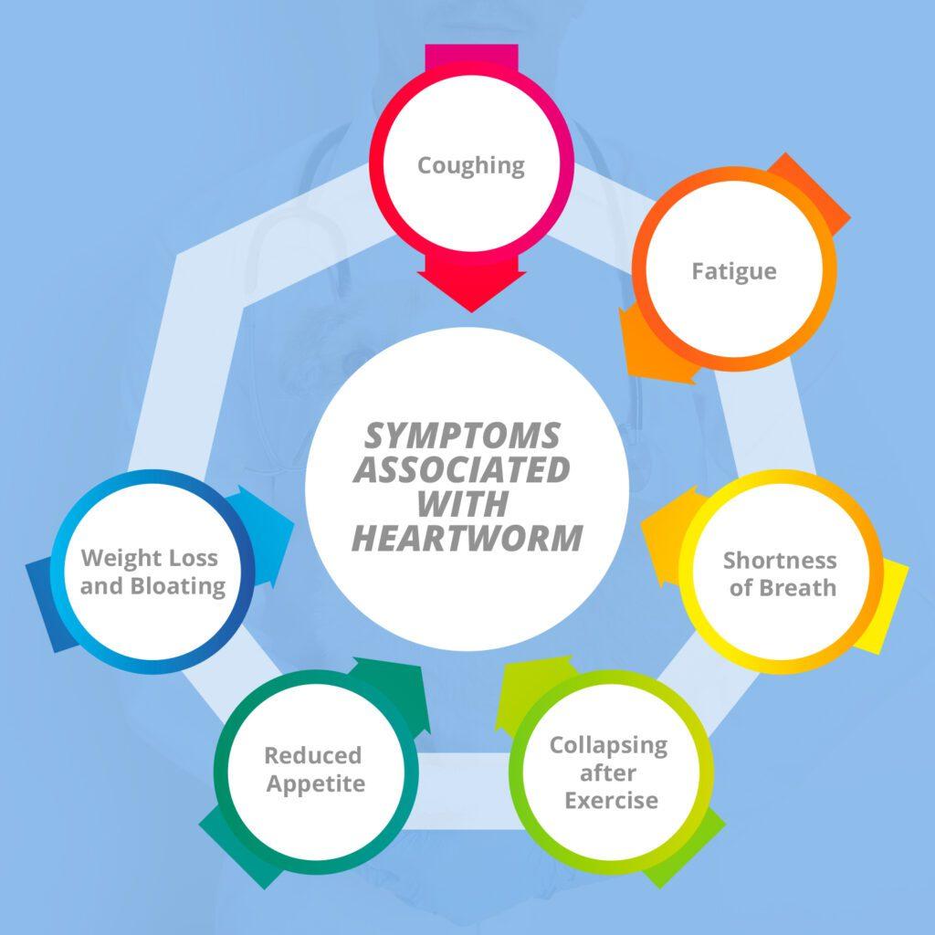 Symptoms of a Heartworm