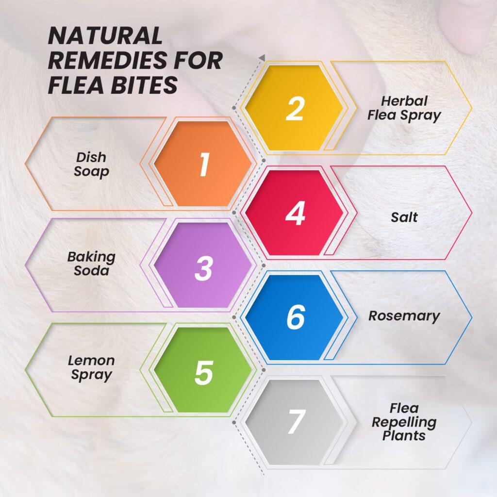 natural remedies for flea bites